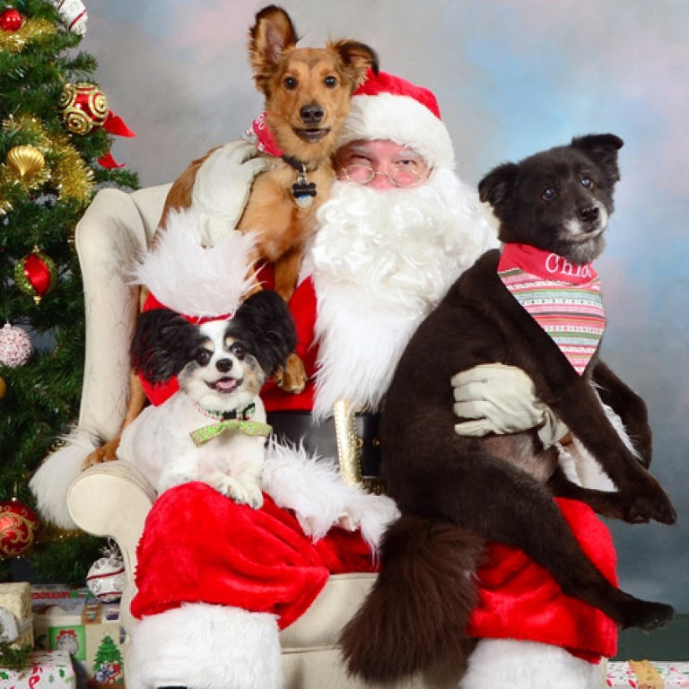 Santa Paws For A Cause!